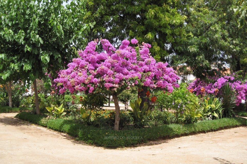 JardimMunicipalMourao-4